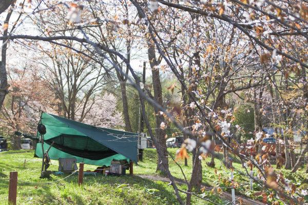 春の穂別キャンプ場