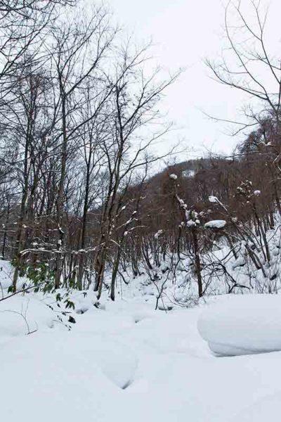 乙女の滝付近_雪がモコモコ