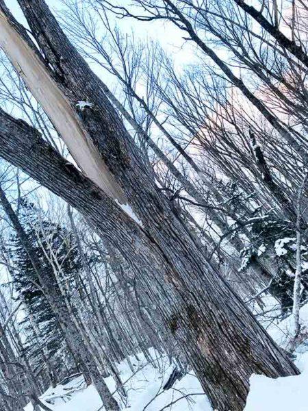タウシュベツ川橋梁旅_1日目_タウシュベツ川橋梁への道_割れた木